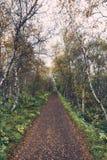 Ισλανδικό δάσος Στοκ εικόνα με δικαίωμα ελεύθερης χρήσης