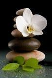 Ισορροπώντας zen πέτρες στο Μαύρο με το άσπρο λουλούδι Στοκ Εικόνες