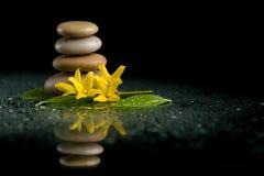 Ισορροπώντας zen πέτρες στο Μαύρο με το κίτρινο λουλούδι Στοκ φωτογραφία με δικαίωμα ελεύθερης χρήσης