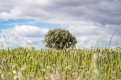 Ισπανία, άγριοι τομείς, España Campo Silvestre Στοκ φωτογραφίες με δικαίωμα ελεύθερης χρήσης