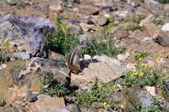 Ισπανία, Κανάριο νησί, ζωολογία Στοκ φωτογραφία με δικαίωμα ελεύθερης χρήσης