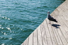 Ισπανία Καταλωνία Βαρκελώνη Seagull στην αποβάθρα Στοκ Εικόνα