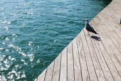 Ισπανία Καταλωνία Βαρκελώνη Seagull στην αποβάθρα Στοκ Εικόνες