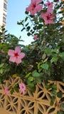 Ισπανικά λουλούδια Στοκ εικόνα με δικαίωμα ελεύθερης χρήσης
