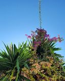 Ισπανικά λουλούδια Στοκ εικόνες με δικαίωμα ελεύθερης χρήσης