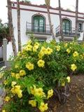 Ισπανικά λουλούδια στοκ εικόνα