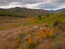 ισπανικά speargrass Στοκ Φωτογραφία