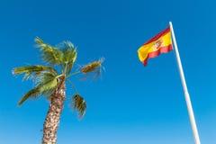 Ισπανικοί σημαία και φοίνικας στο μπλε ουρανό Στοκ Εικόνες