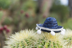 Ισπανικός κάκτος με το καπέλο Στοκ Φωτογραφίες