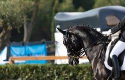 Ισπανικό άλογο Στοκ Εικόνες