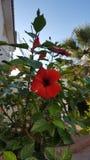 Ισπανικό λουλούδι Στοκ Εικόνες