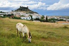 Ισπανικό τοπίο με ένα κάστρο και ένα άλογο Στοκ εικόνα με δικαίωμα ελεύθερης χρήσης