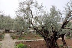 Ισραήλ Ιερουσαλήμ - 15 Φεβρουαρίου 2017 κήπος gethsemane Η θέση του Ιησούς Χριστού ` s που προσεύχεται στη νύχτα της σύλληψης Στοκ Φωτογραφίες