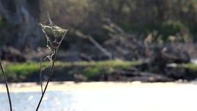 Ιστοί αράχνης που φυσούν στον αέρα φιλμ μικρού μήκους