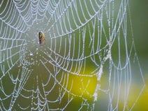 Ιστοί αράχνης στα σταγονίδια της δροσιάς νωρίς το πρωί στον τομέα στοκ εικόνες