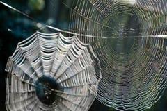 ιστοί αράχνης Στοκ εικόνα με δικαίωμα ελεύθερης χρήσης