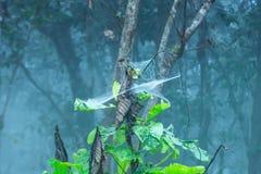 Ιστοί αραχνών στα δέντρα στο εθνικό πάρκο λουριών Sai στοκ φωτογραφίες