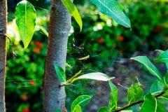 Ιστοί αραχνών στο δέντρο στοκ εικόνα