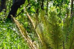 Ιστοί αραχνών στο δέντρο στοκ εικόνα με δικαίωμα ελεύθερης χρήσης