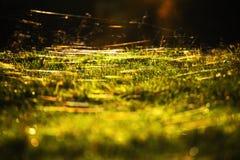 Ιστοί φθινοπώρου στοκ εικόνα με δικαίωμα ελεύθερης χρήσης