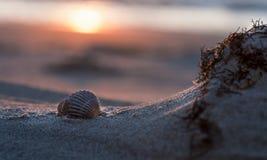 Ιστορία κοχυλιών θάλασσας Στοκ Εικόνες