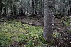 Ιστορία του δάσους βουνών Στοκ Φωτογραφίες