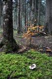 Ιστορία του δάσους βουνών Στοκ Εικόνες