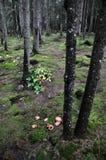 Ιστορία του δάσους βουνών Στοκ εικόνες με δικαίωμα ελεύθερης χρήσης