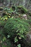 Ιστορία του βουνού forest_10 Στοκ φωτογραφία με δικαίωμα ελεύθερης χρήσης
