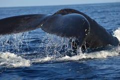 Ιστορία φαλαινών Humpback Στοκ φωτογραφία με δικαίωμα ελεύθερης χρήσης
