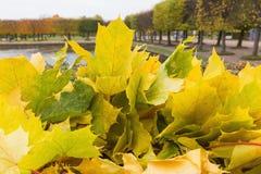 Ιστορία φθινοπώρου Στοκ Φωτογραφία