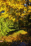 Ιστορία φθινοπώρου Στοκ Εικόνα