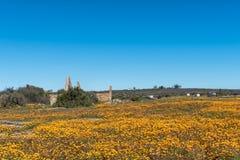 Ιστορικά καταστροφή και wildflowers σε Groenrivier κοντά σε Nieuwoudtville στοκ φωτογραφία