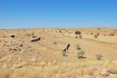 Ιστορική περίφραξη πετρών αποίκων για τα πρόβατα και τα βοοειδή Στοκ εικόνα με δικαίωμα ελεύθερης χρήσης