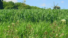 Ιστορικός ανεμόμυλος στο τοπίο θερινών τομέων κοντά στα πράσινα δέντρα φιλμ μικρού μήκους
