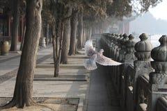 Ιστορικός στο Πεκίνο στοκ εικόνα