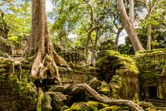 Ιστορικός σύνθετος του ναού TA Prohm κοντά σε Siem συγκεντρώνει στην Καμπότζη στοκ φωτογραφίες με δικαίωμα ελεύθερης χρήσης