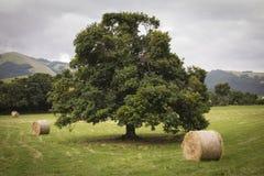 Ιστορικό δέντρο με τις σφαίρες σανού Στοκ Εικόνα