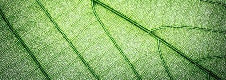 Ιστού εμβλημάτων πράσινο υπόβαθρο σύστασης φύλλων μακρο Στοκ φωτογραφία με δικαίωμα ελεύθερης χρήσης