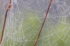 Ιστός ή ιστός αράχνης αραχνών Στοκ Εικόνα