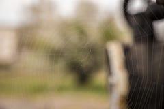 Ιστός ή ιστός αράχνης αραχνών Στοκ φωτογραφία με δικαίωμα ελεύθερης χρήσης