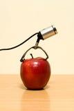 Ιστός αιθουσών μήλων Στοκ φωτογραφία με δικαίωμα ελεύθερης χρήσης