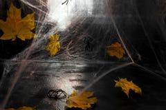 Ιστός αράχνης ή Ιστός αραχνών ` s σε ένα μαύρο κλίμα, Στοκ εικόνα με δικαίωμα ελεύθερης χρήσης