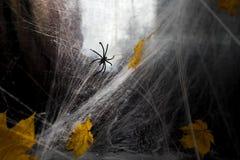 Ιστός αράχνης ή Ιστός αραχνών ` s σε ένα μαύρο κλίμα, Στοκ Φωτογραφίες