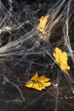 Ιστός αράχνης ή Ιστός αραχνών ` s σε ένα μαύρο κλίμα, Στοκ φωτογραφία με δικαίωμα ελεύθερης χρήσης
