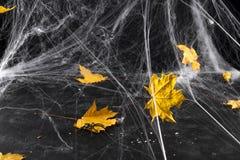 Ιστός αράχνης ή Ιστός αραχνών ` s σε ένα μαύρο κλίμα, Στοκ Εικόνα