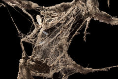 Ιστός αράχνης ή Ιστός αραχνών που απομονώνεται στο μαύρο υπόβαθρο Στοκ Εικόνες