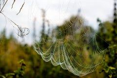 Ιστός αράχνης και δροσιά Στοκ εικόνες με δικαίωμα ελεύθερης χρήσης