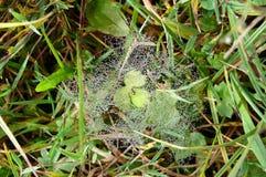 Ιστός αράχνης και δροσιά @ Στοκ φωτογραφίες με δικαίωμα ελεύθερης χρήσης