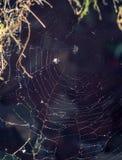 Ιστός αράχνης με το blury υπόβαθρο Στοκ Φωτογραφίες